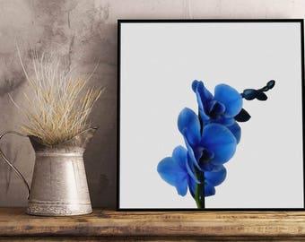 Blue Orchid - Framed / Unframed canvas / Print - Botanic