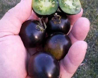 Dancing With Smurfs' Tomato 10 Seeds Sweet,yielding ,rare, NON-GMO