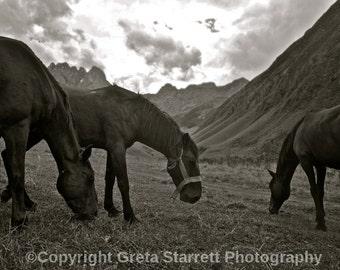 Horses in the Mountains, Republic of Georgia