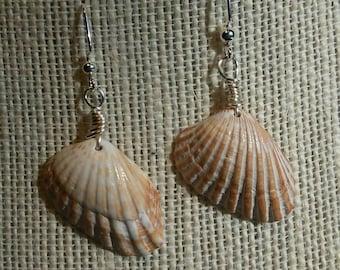 tan sea shell earrings