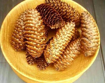 Large pine cones. 5 in a set