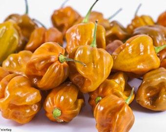 Habanero Mustard Hot Chilli Pepper (10 SEEDS)