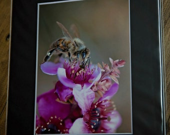 5x7 matted print, bee print, pink cherry blossom, 5x7, fine art print