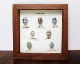 Realistic felt eggs ornithology gift, unusual bird eggs, quirky framed felt egg collection, needle felted finch eggs, country living decor