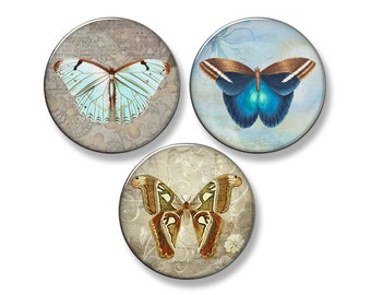 "BUTTERFLY Fridge Magnet Set - 3 Large 2.25"" Round Magnets (Set #2)"