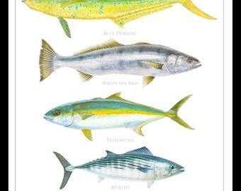 Coastal Gamefish of California Poster