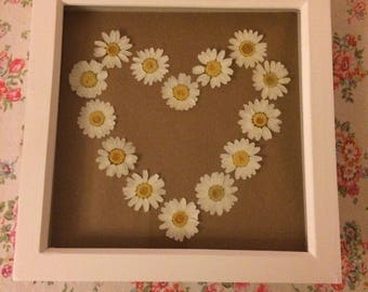 Dried Pressed Large Daisies Heart Design Framed