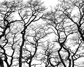"Fine Art Photography Print, Large Wall Art Print, Horizontal,  black and white, nature, zen, minimalistic, ""TREES"""