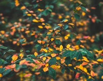 Nature photography, autumn leaves, green, yellow, orange, colour, tree