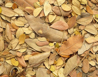 Short shot of dry leaves on the floor forming a texture