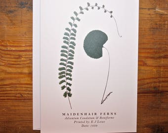 Maidenhair Ferns: Greeting Card