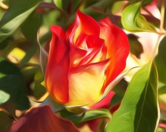 Digitally Enhanced 8x10 Photo Print - Rose Bud
