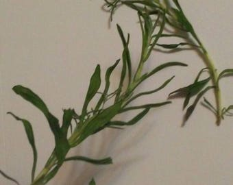 Dried Rosemary Whole Sprigs