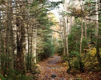 White Mountains NH Trail