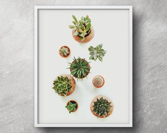 Minimalist cactus photo, Succulents print, Succulent printable, Digital download, Succulent art print, Cactus poster, Cactus print