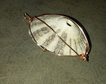 Conch shell pendant