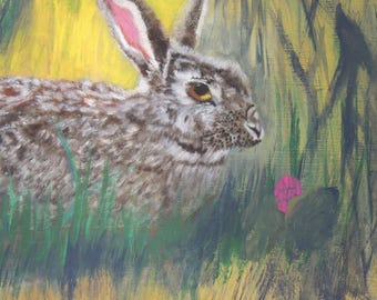 cottontail in the shade and sun