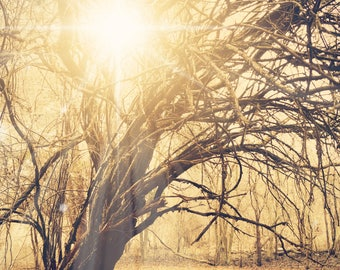 Sunlight through an old tree, fantasy tree art photography, nature photography, surreal photo print, majestic, woodland, fairytale print
