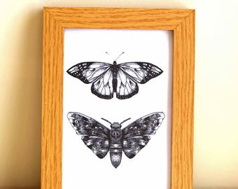 Butterfly and Moth print