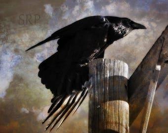 Gathering Storm - PHOTO PRINT - Raven