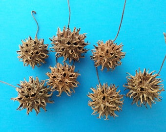 40 Sweet Gum Balls for crafts, gifts, decorations, weddings