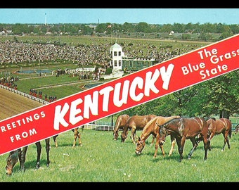 Greetings From Kentucky Postcard The Bluegrass State Horses Thoroughbred KY PC