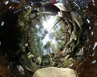 360Forest - Water Window
