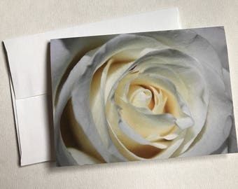 White Rose Blank Card