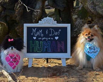 Reveal Gender, Dog Bandana's, Big Brother & Big Sister (2)  or 2 of same,  Baby Announcement, New baby Reveal, Shower Gift, Photo Shoot