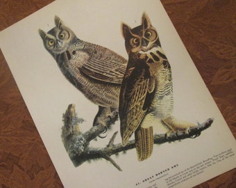 Vintage Owl Illustration - Audubon Book Plate for Framing - Great Horned Owl
