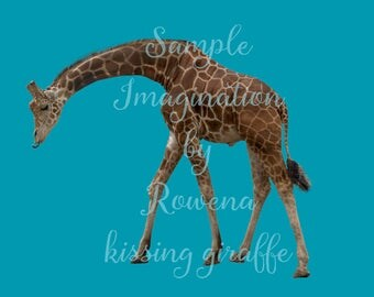 Giraffe and Zebra clipart | for use with Digital backgrounds |digital backdrops | baby zebra |young giraffe | overlays | overlay