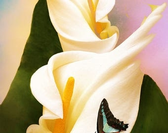 Calla Lily W Butterfly Canvas