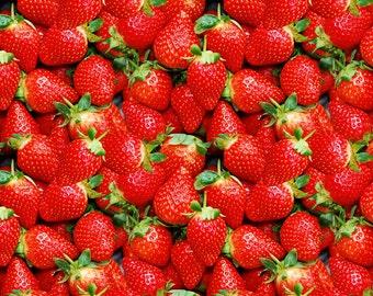 Knit Strawberries euro import 1/2 yard
