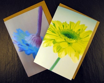 Pack of 2 Gerbera flower greetings cards by Liz Garnett