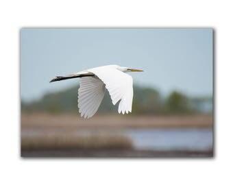 Wildlife print, nature art, bird photography, flying bird, bird in flight, beach decor. nature print, apartment art, great egret, greenpix