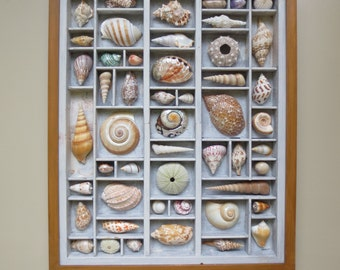 Seashell art for the home, coastal or otherwise, colorful sea shells that are composed within a repurposed and altered printer's type drawer