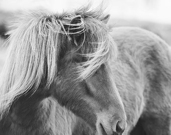 Modern Horse Photography in Black and White | Equine Wall Art