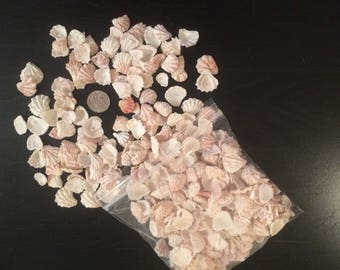 Seashells Kitten Paws Natural /Real 1 LB Lot