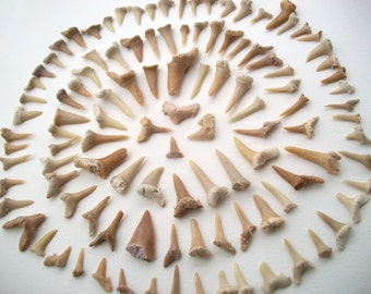 Lot of 100 Damaged Fossilized Shark Teeth