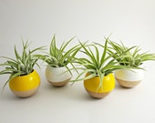 Sphere Pod Planter // Yellow or White