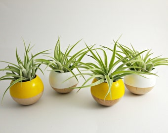 Sphere Pod Planter // Yellow or White
