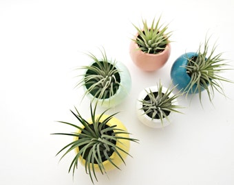 Mini Air Plant Pod Magnet with Air Plant