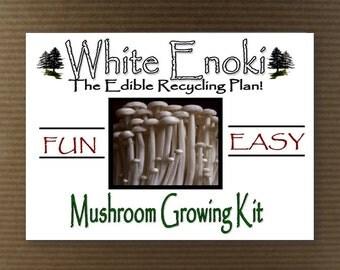 NEW! White Enoki Mushroom Growing Tissue  Kit Project