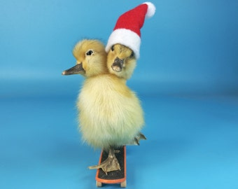 Mature,taxidermy of two head freak duckling on skateboard,christmas gift