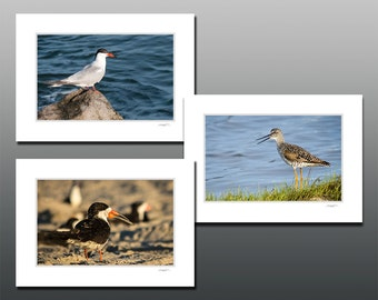 Shore Bird Small Matted Photography Print Collection, Black Skimmer, Common Tern, Sandpiper Set, Fit 5x7 inch frame, Birder