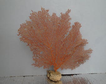 "12.3"" x 11"" Pacifigorgia Red  Sea Fan Seashells Reef Coral"