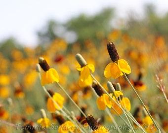 Summer Flower Photograph 2x3 Aspect Ratio Photograph Digital Download Floral Nature Photography Nursery Decor