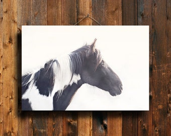 In the Light - Horse photography - Paint horse photography - Black and white horse photography - Horse art - Animal photography