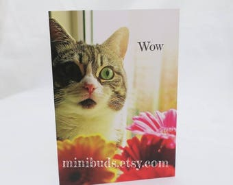 Tabby Cat 'Wow' Card, Gerbera Daisy Bouquet photographic art. Birthday, congratulations, good luck, greeting. FamilyCat cards by Minibuds