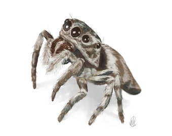 Jumping Spider portrait 8.5 x 11